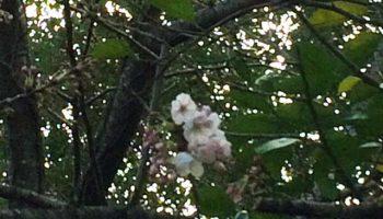 博多の花見