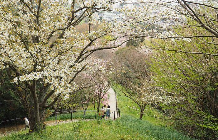 2019春 白野江植物園